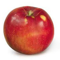 Jonamac Apple
